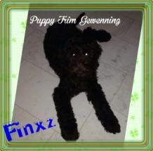 Fynxz