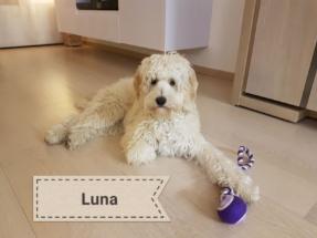Prachtige Doodle Luna!